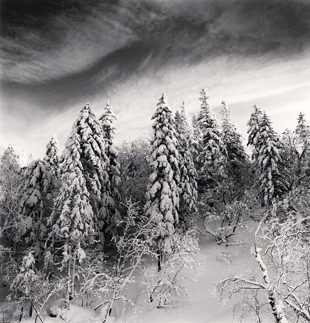 Michael Kenna, 'Snow Clad Trees, Heilongjiang, China', 2012, Robert Mann Gallery