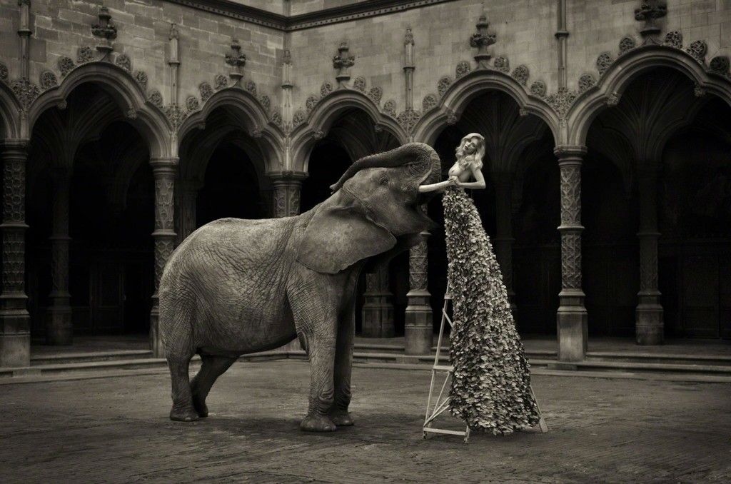 Marc Lagrange   The Elephant in the Room (2014)   Available for Sale ...