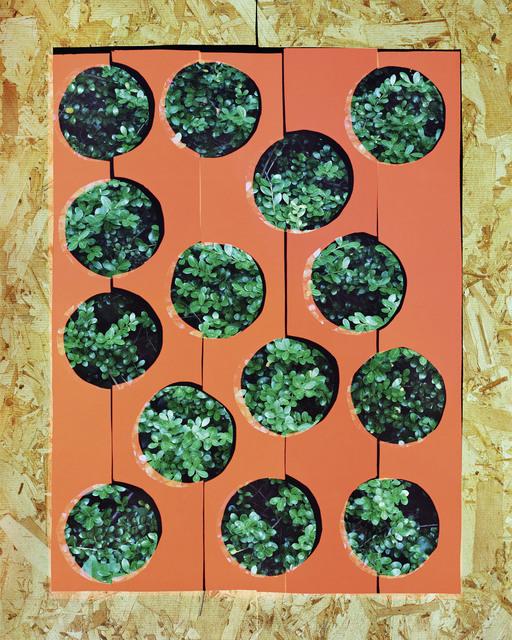 , 'Bush,' 2015, Galerie Christophe Gaillard