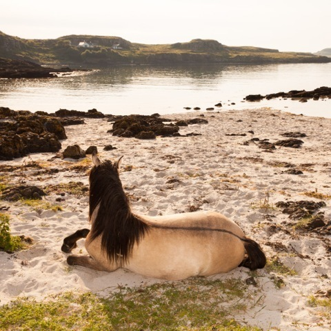 , 'Horse, Beach, Isle of Muck,' 2014, Mindy Solomon Gallery