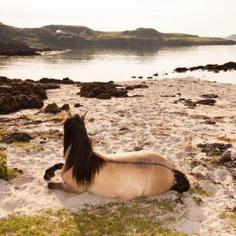 , 'Horse, Beach, Isle of Muck,' 2014, Mindy Solomon Gallery