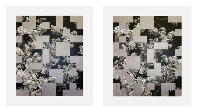 , 'Cherry Tree Grid 002 (diptych),' 2015, James Harris Gallery