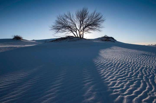 , 'Cottonwood Tree at Sunrise, Winter, White Sands National Monument, New Mexico,' ca. 2016, Afterimage Gallery
