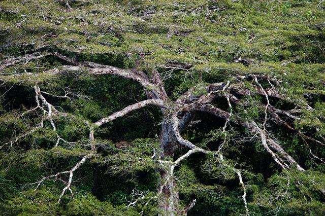 , 'Amazon Cristalino canopy (#150),' 2009, Catherine Edelman Gallery