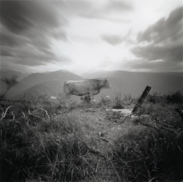 , 'Vache (glorious Ariegeois),' 2007, Newzones