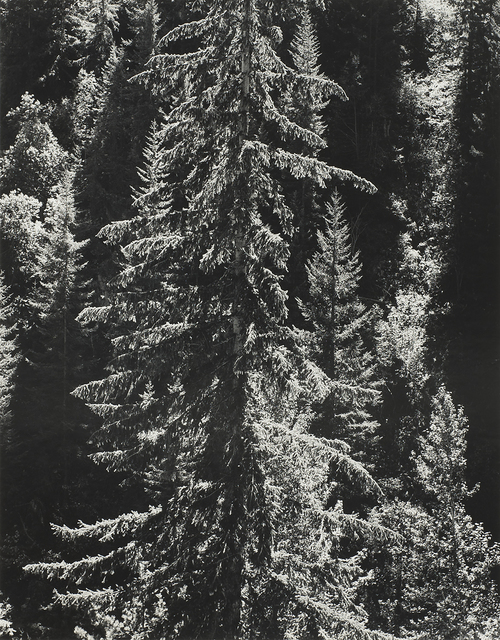 , 'Stehekin River Forest (Mural),' 1958, The Ansel Adams Gallery