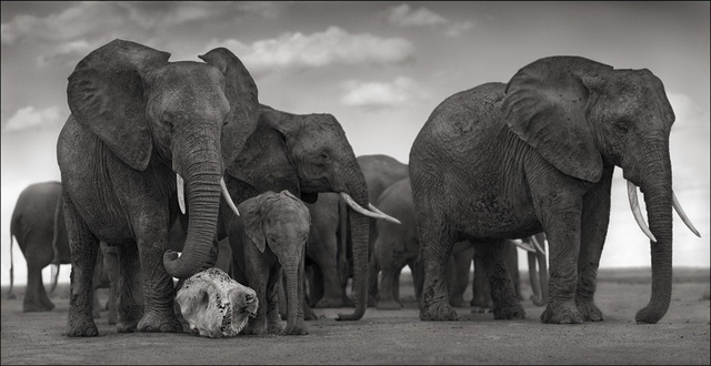 , 'Elephant Skull, Amboseli ,' 2010, photo-eye Gallery