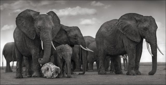 , 'Elephant Skull, Amboseli ,' 2010, photo-eye Gallery