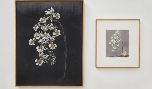 , 'These are still flowers - Weisse Orchideen,' 2013, Tang Contemporary Art