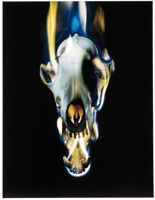 Mat Collishaw, 'Blowback', 2015, Tate Ward Auctions