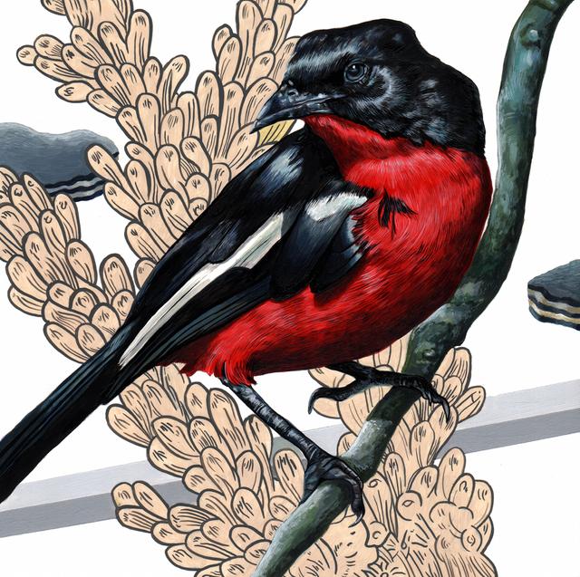 , 'Endangered Bird #152,' 2015, Jenn Singer Gallery