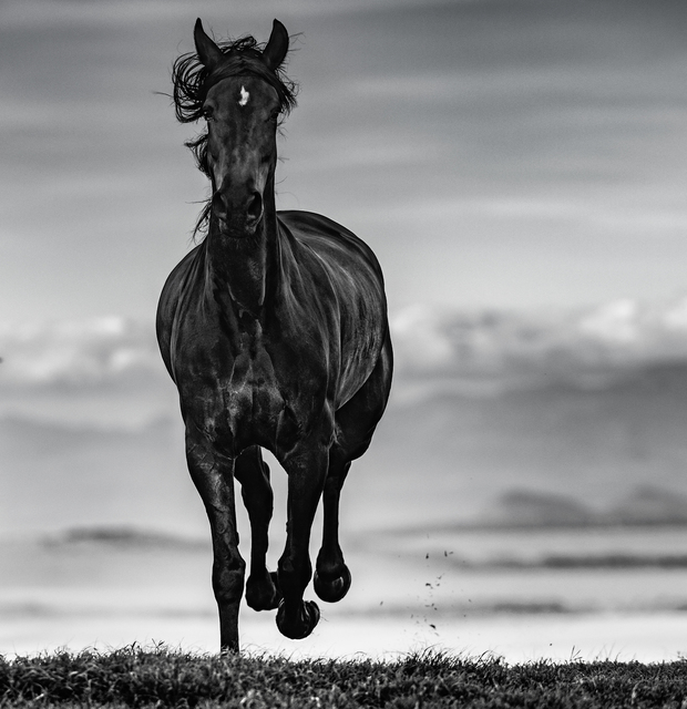 David Yarrow, 'Black Beauty ', 2019, Maddox Gallery