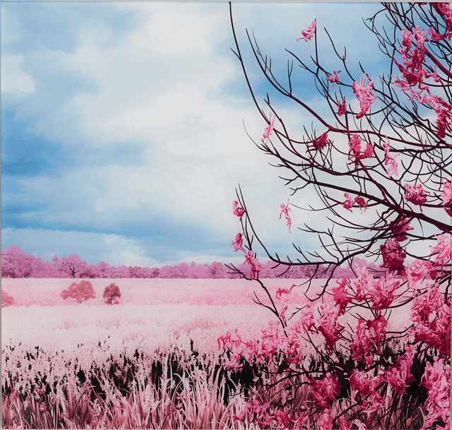, 'Pink Meadow,' 2018, Allouche Gallery