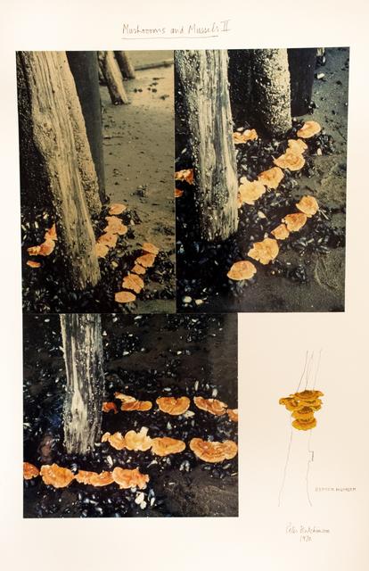 Peter Arthur Hutchinson, 'Mushrooms and Mussels II', 1970, Gaa Gallery