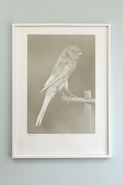 , 'Canaries (1),' 2009, Studio Voltaire