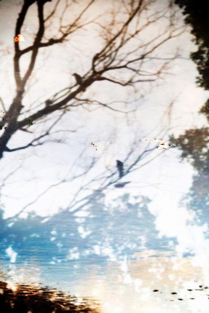 , 'YUSURIKA 029,' 2015, CHRISTOPHE GUYE GALERIE