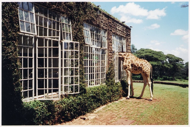, 'Rubber Necking, Kenya, Vogue,' 2007, Staley-Wise Gallery