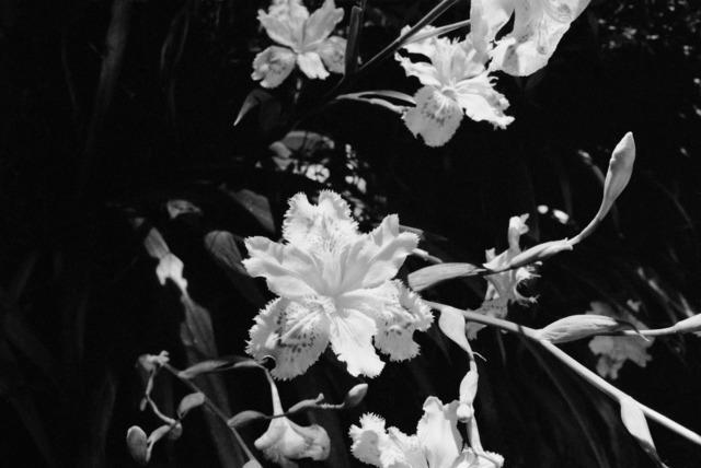 AMI SIOUX, 'Flowers Outside Shrine, Shikoku, Japan, ', 2014, Mannerheim Gallery
