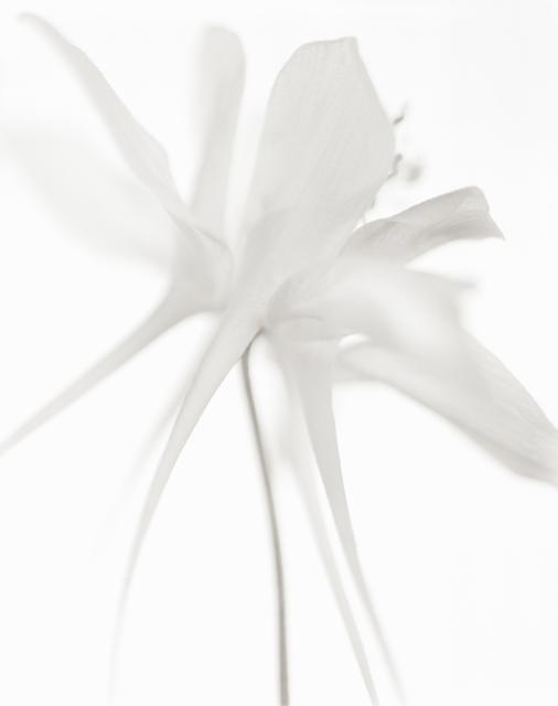Yumiko Izu, 'Secret Garden Blanc 95', 2009, Howard Greenberg Gallery