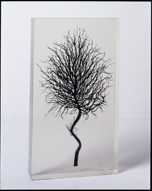 , 'Lanthes Verdeaus,' 2005, Octavia Art Gallery
