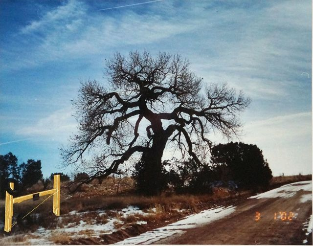 , 'Cottonwood,' 2002, Vivian Horan Fine Art