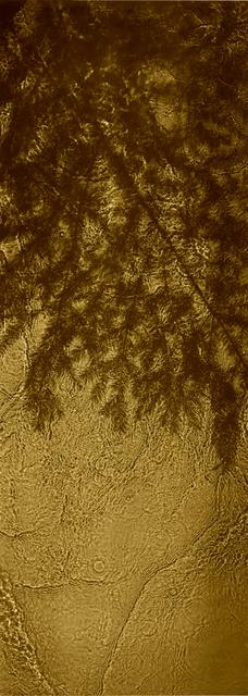 , 'River Taw, Streens, Gold Fir ,' 1998-2020, Purdy Hicks Gallery