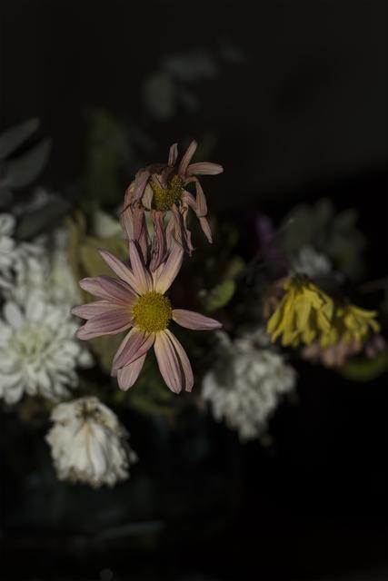 , 'Still, Crisantemos,' 2016, Miranda Bosch