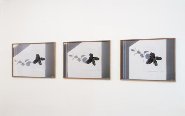 , 'Ceci n'est pas une plante,' 2014, Georg Kargl Fine Arts