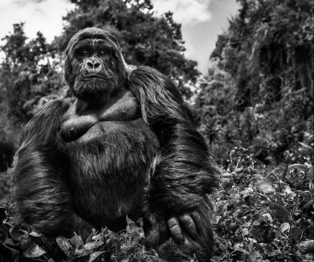 David Yarrow, 'Jurisdiction', 2019, Isabella Garrucho Fine Art