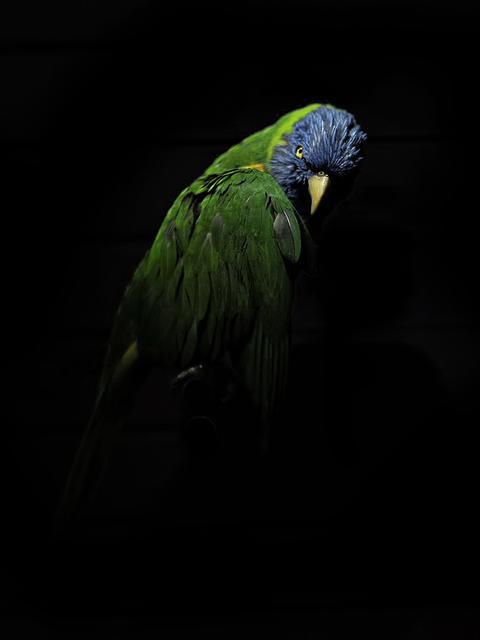 , 'Oiseau VI,' 2016, Fotospot