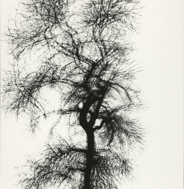 , 'Multiple Exposure Tree, Chicago,' 1956, Pace/MacGill Gallery