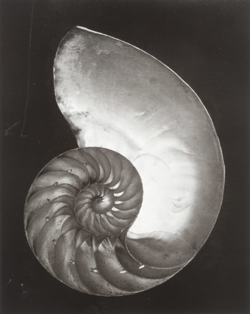 Edward Weston: His Life and Photographs [SIGNED]