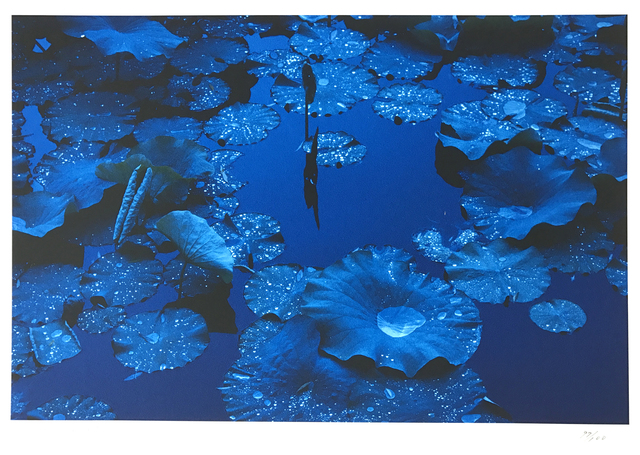 , 'Blue Lotus,' 2003, 99Prints
