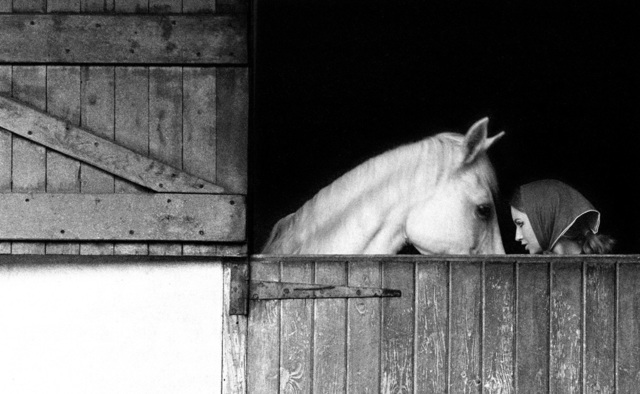 , 'November Girl Horse and Stable,' , Milk Gallery