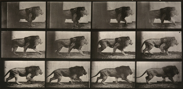 , 'Animal Locomotion: Plate 722 (Lion Walking),' 1887, Huxley-Parlour