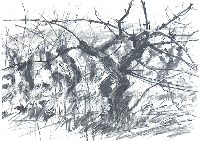 Geoffrey Lefever, 'Vines in winter', 1969, Robert Eagle Fine Art
