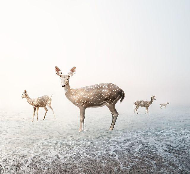 , 'Stay My Deer,' 2019, The Directed Art Modern