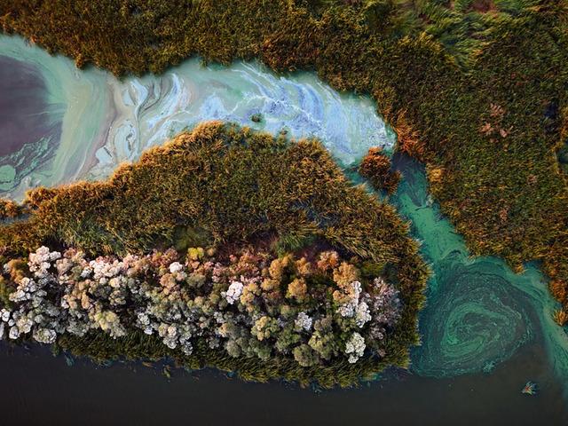 , 'Montegut, Algae Blooms Near Montegut, Louisiana, 11/1/2016,' 2016, A Gallery for Fine Photography