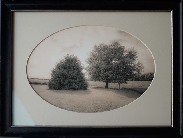 , 'Two Trees, Hastings, Nebraska,' , Etherton Gallery