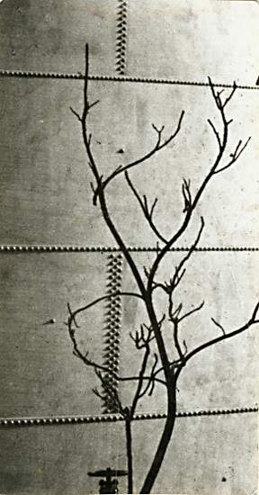 , 'Modernist Tree Study against a Riveted Metal Tank,' 1923c/1923c, Contemporary Works/Vintage Works