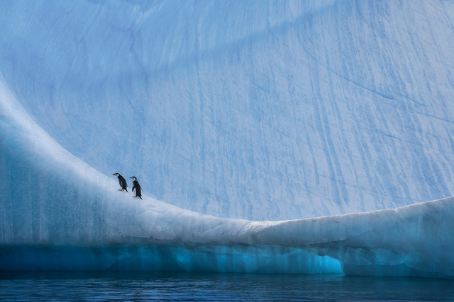, 'Home Ice Advantage,' , Paul Nicklen Gallery