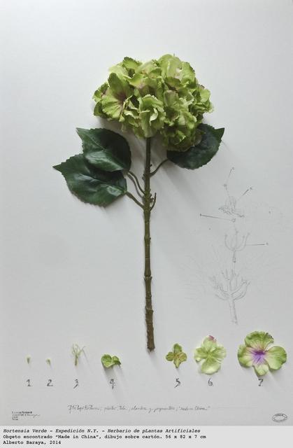 , 'Hortensia Verde. Expedición N.Y. - Herbario de Plantas Artificiales,' 2014, espaivisor - Galería Visor