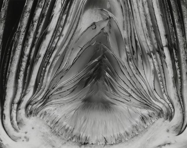 Edward Weston, 'Artichoke, Halved, 1930', 1930, Seagrave Gallery