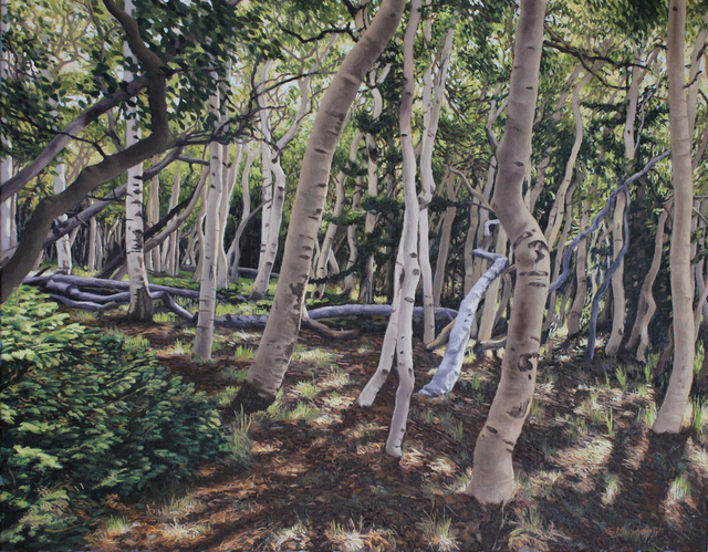 , 'Aspen Forest,' , Davis Gallery & Framing