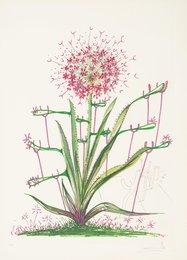 Desert Cactus, from Florals