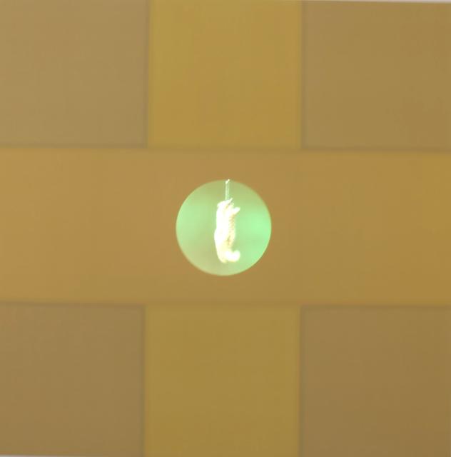 Curtis Anderson, 'Ascension', 2017, Video/Film/Animation, Seide auf Holzpanel, Video Rück-projektionssystem, Dauer ca. 4 min, Galerie Brigitte Schenk