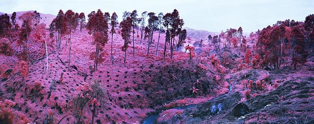 , 'If I Ran the Zoo, North Kivu, eastern Congo,' 2012, Jack Shainman Gallery