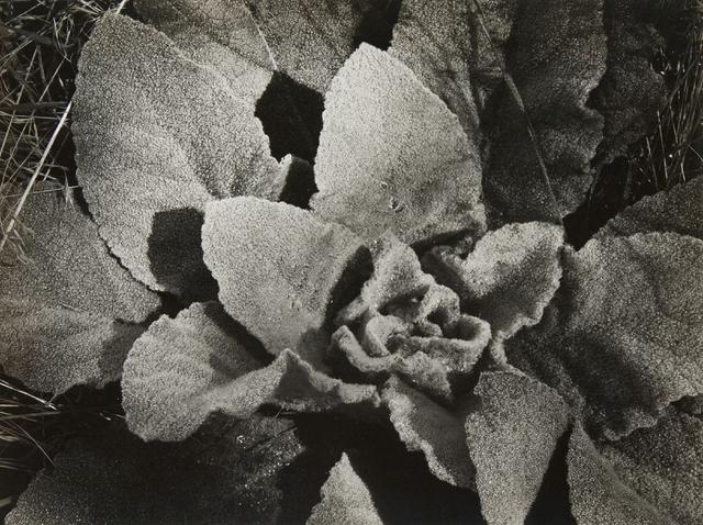 , 'Mullen [Zion National Park],' ca. 1940, Atlas Gallery