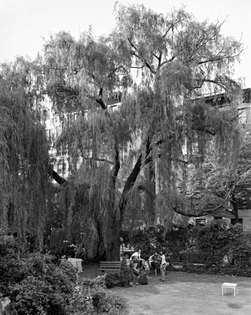 , 'Weeping Willow, La Plaza Cultural Garden, New York ,' 2011, Galerie Les filles du calvaire