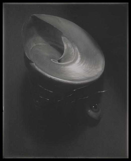 , 'Still Life with Shell,' Prague 1955, Johannes Faber
